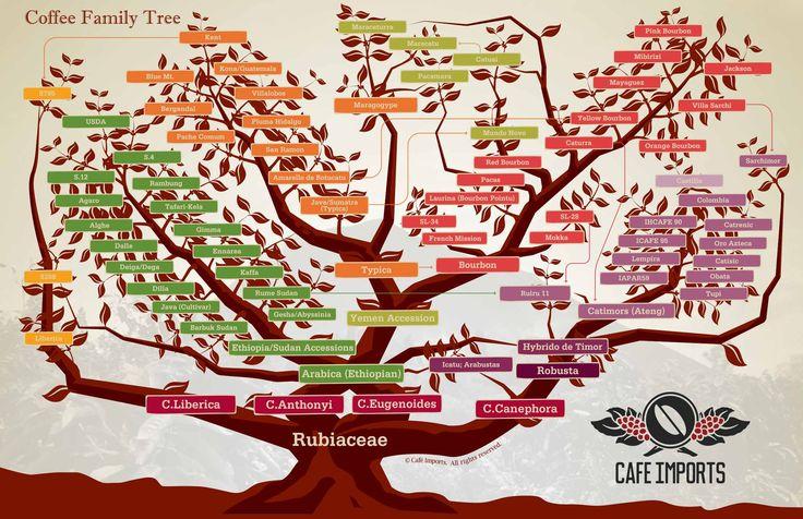 koffie varieteit