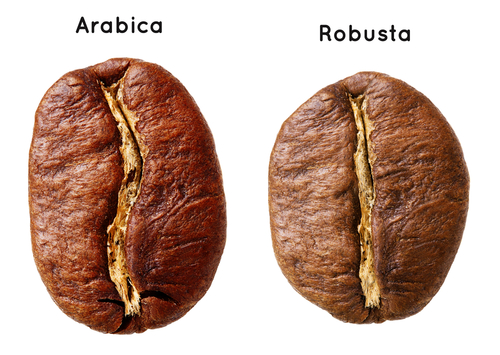 Arabica Bonen Vs Robusta Bonen