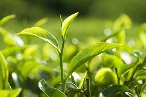 Workshop introductie tot thee – GEANNULEERD WEGENS HET CORONAVIRUS